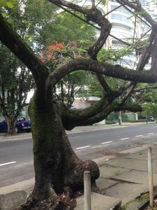 As estranhas árvores da Rua Teresina (Manaus-AM)