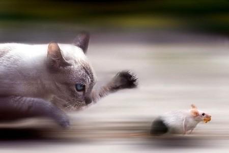 Xibiulo, o gato