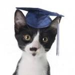 O período da virada na facul: o sétimo